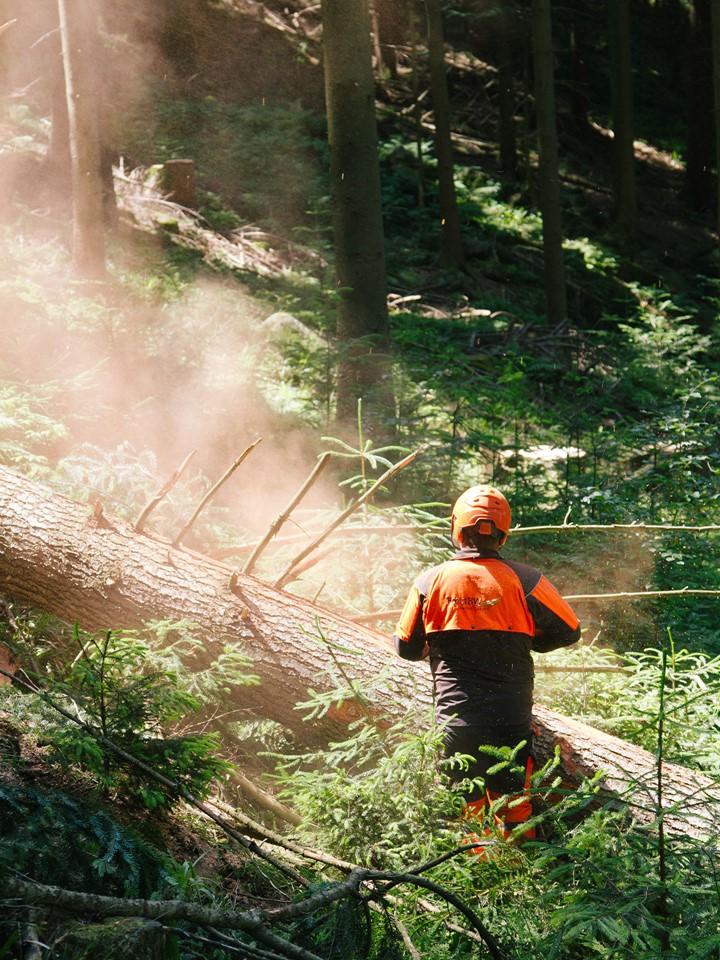 a-sense-of-dinesen_sissel-tolaas_schwarzwald-forest.jpg